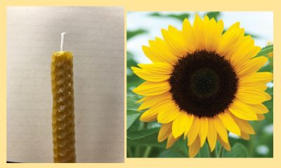 Kids' Craft- Bee and Flower