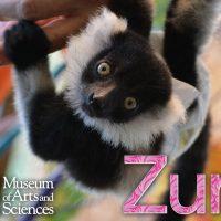 Lemur Fun-Fact Friday