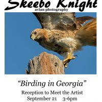 "Skeebo Knight, ""Birding in Georgia"""