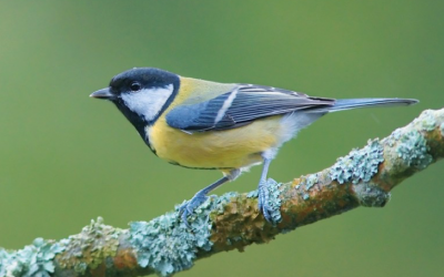 Ocmulgee Audubon Society Meeting