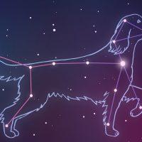 Constellation Critter Wednesday
