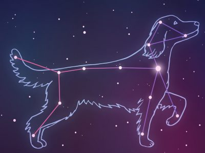 Constellation Critter Wednesday