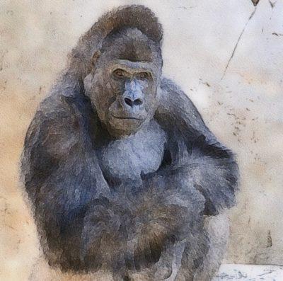 Online Watercolor: Wonderful Wildlife