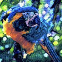 Acrylic: Wildlife (Morning Session)