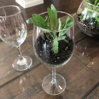 Wine Glass Terrarium Workshop - First St. Art & Wine Festival