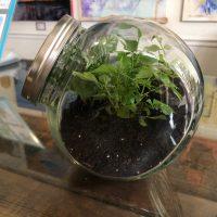Plant & Sip: Terrariums