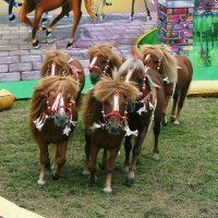 """Horses, Horses, Horses"""